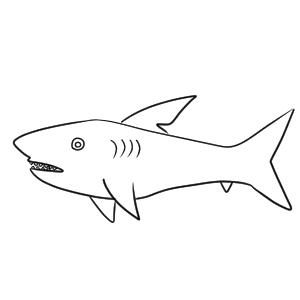 サメ 書き方