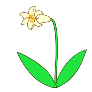 百合の書き方は 花のイラストを簡単に描くポイントは イラストの簡単