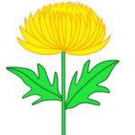 菊の書き方 イラストを簡単に描くポイントとは?
