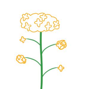 菜の花 イラスト 描き方
