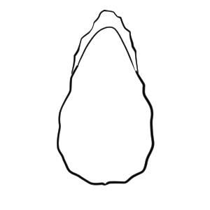 牡蠣 イラスト 手書き